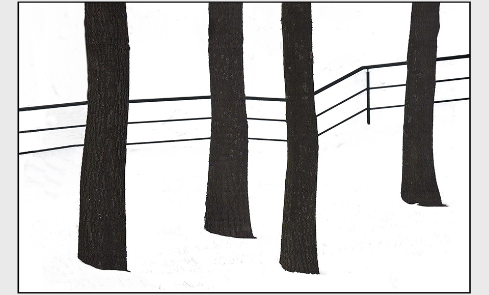 Drvo 02
