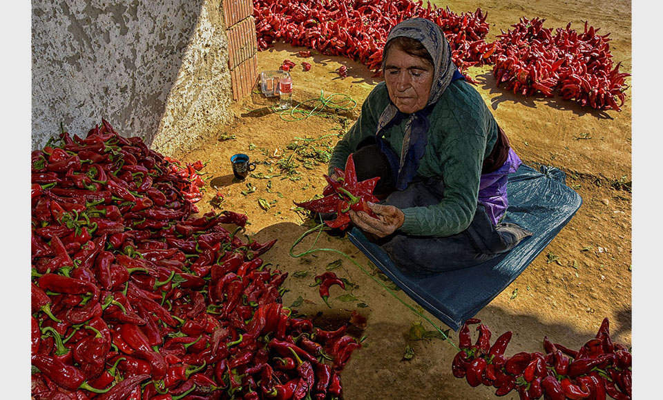 String peppers SMANJENA